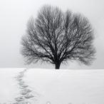 talvine sanghamatk